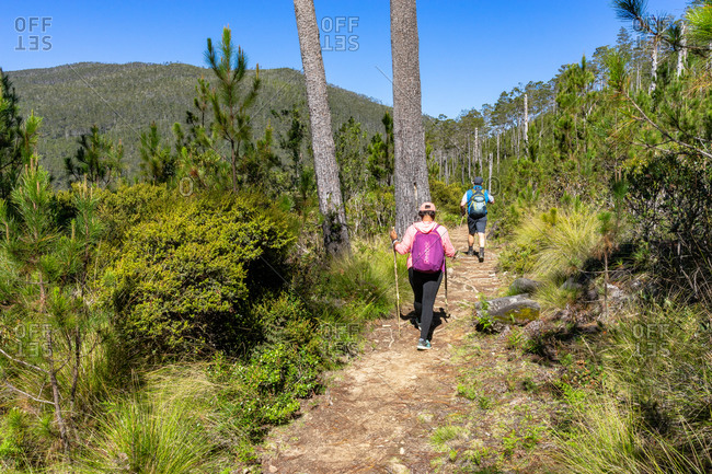 August 18, 2019: Greater Antilles, Dominican Republic, Jarabacoa, Manabao, Parque Nacional Jose Armando Bermudez, Pico Duarte, hikers in the light mountain forest on the way to Pico Duarte
