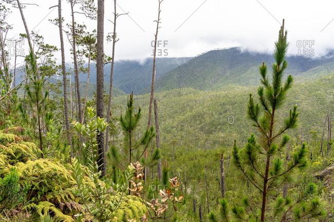 Greater Antilles, Dominican Republic, Jarabacoa, Manabao, Parque Nacional Jose Armando Bermudez, Pico Duarte, view over the mountain landscape of the Jose A. Bermudez National Park