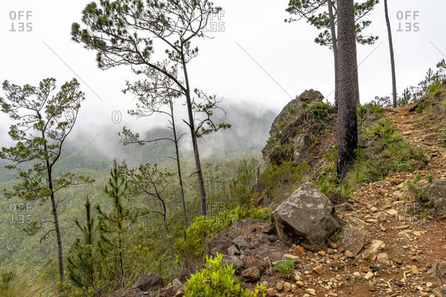 Greater Antilles, Dominican Republic, Jarabacoa, Manabao, Parque Nacional Jose Armando Bermudez, Pico Duarte, mountain path through the light mountain forest on the way to the refuge La Comparticion