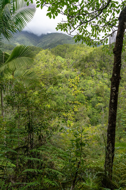 Greater Antilles, Dominican Republic, Jarabacoa, Manabao, Parque Nacional Jose Armando Bermudez, Pico Duarte, view over the dense mountain forest in the Jose A. Bermudez National Park