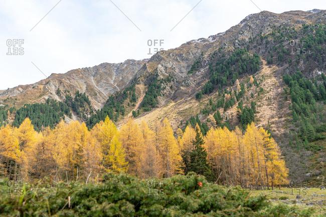 Europe, Austria, Tyrol, Stubai Alps, Sellrain, St. Sigmund im Sellrain, autumn colored mountain forest in the Gleirschtal in Sellrain