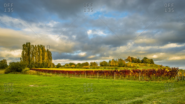 Vineyards on the Bubenhauser Hohe, near Rauenthal in the Rheingau, mystical lighting mood in the Golden October,