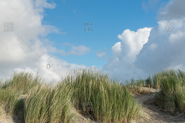 Dune landscape on the North Sea island of Ameland