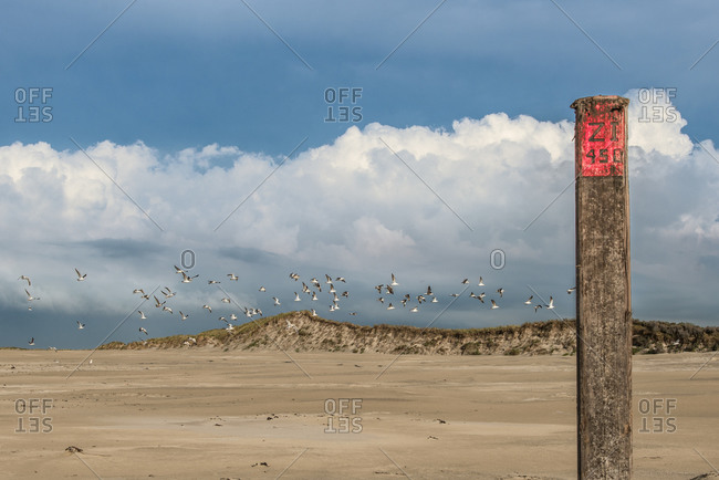 A flock of seagulls over dune landscape