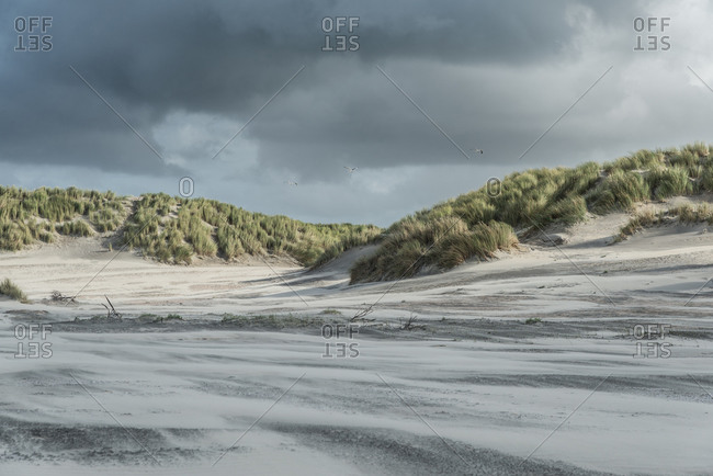 Dune landscape in strong winds
