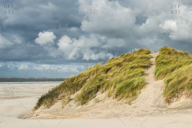 Dune in front of the North Sea beach