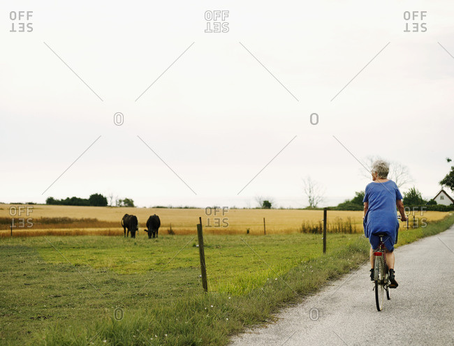 Older woman cycling and looking at cows