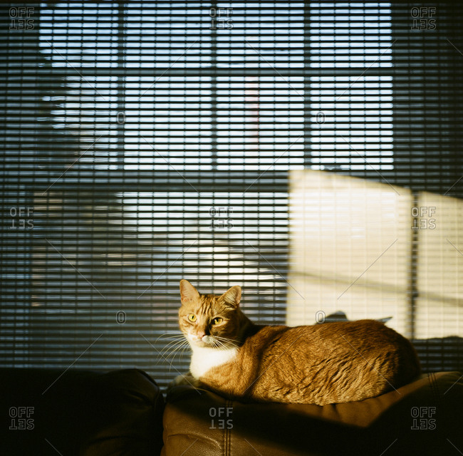 Orange cat relaxing in the sunlight by window