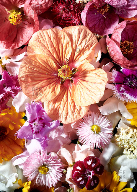 Close up of edible summer flowers in shades of pinks and peach