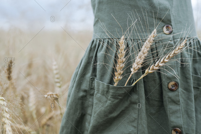 Girl with wheat ears in pocket of green dress