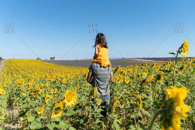 Father carrying daughter on shoulders in sunflower field against clear sky