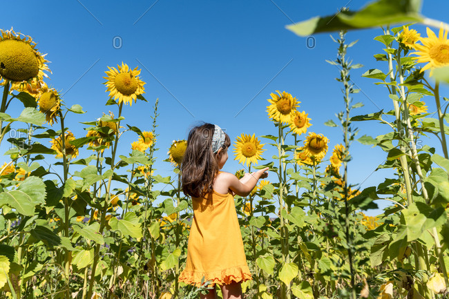 Girl admiring sunflower in field against clear blue sky