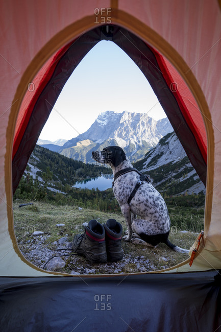 Dog sitting outside pitched tent with Tent Seebensee in background