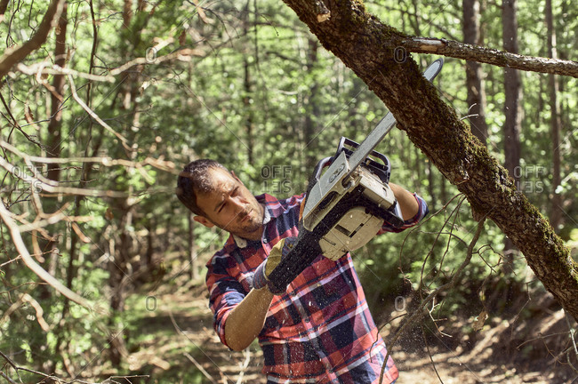 Lumberjack with protective glove using chainsaw to cut tree in forest