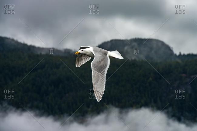 Bird fly above the sky