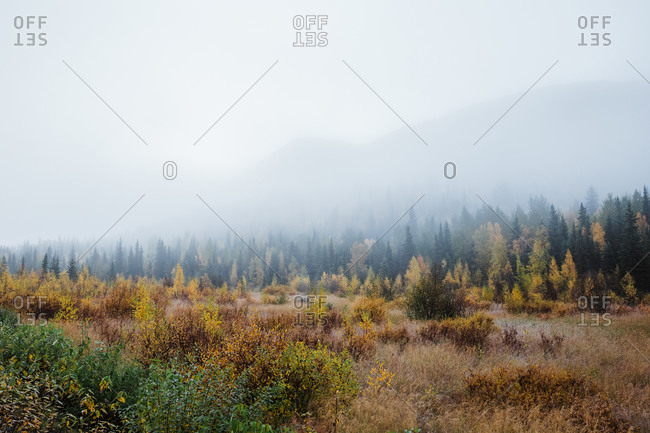 Foggy autumn morning in mountains