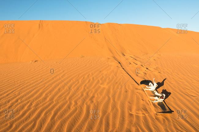 Snow board left on a dune in the erg chebbi desert, morocco. sandboard