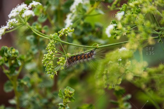 A caterpillar crawls along a stem