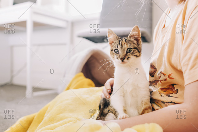 Kitten sitting on young girl in her bedroom
