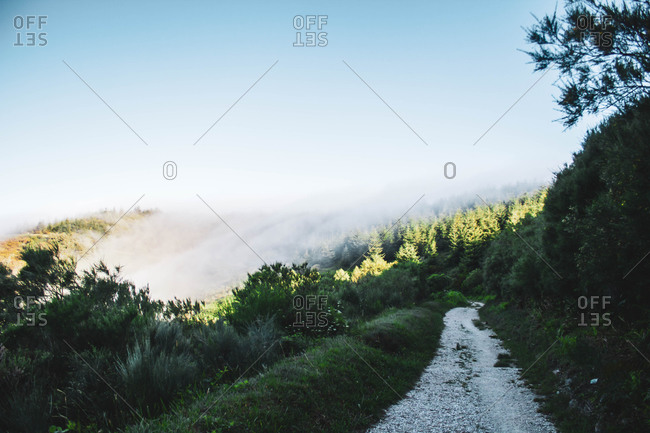 Pine forest with fog above, crossing a stone path