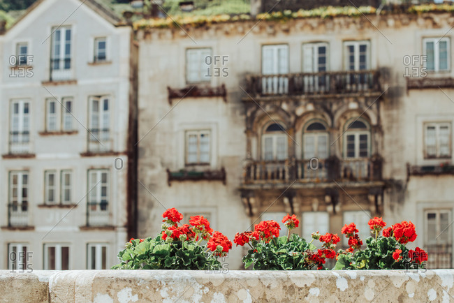 Decorative city flowers on background of historical buildings