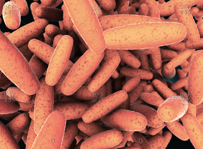 3d illustration of Pasteurella multocida bacteria.