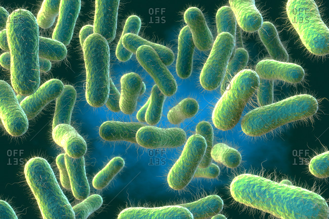 3d illustration of Salmonella sp. bacteria.