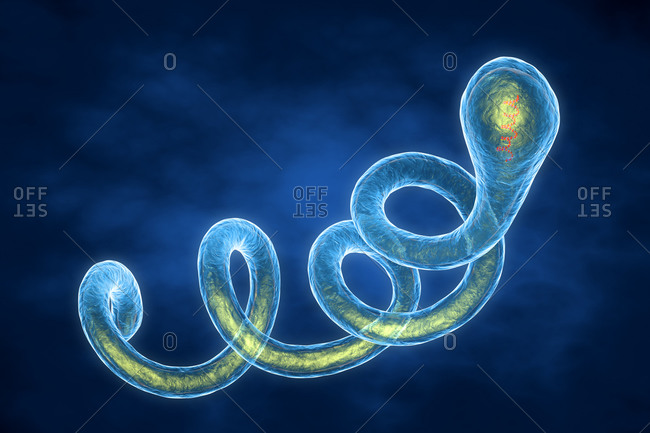 3d illustration of a Spirochaete Borrelia bacterium, the cause of Lyme disease.