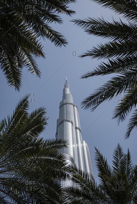 Dubai, United Arab Emirates - April 5, 2018: Low angle view of the Burj Khalifa skyscraper in Dubai seen through palm tree leaves