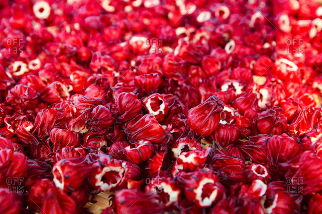 Flower of different varieties - Offset
