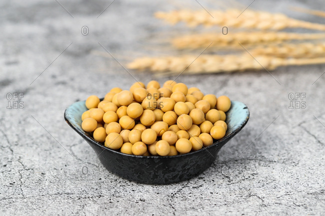Shot of a soybean in a dish