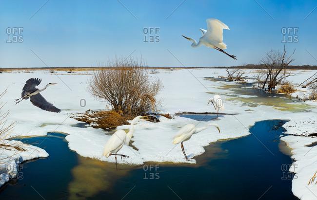 Heilongjiang jixi xing kay lake water birds