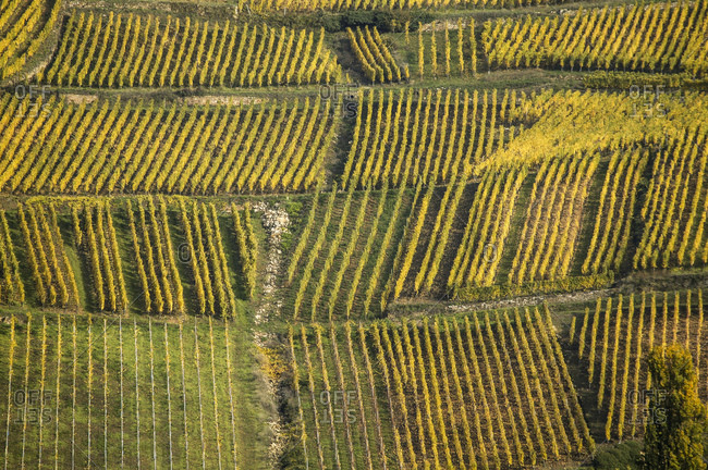 Aerial view of vineyards on route des vins dAlsace, France