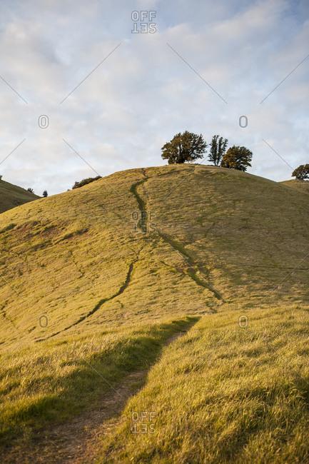Hillside in Marin, California, USA