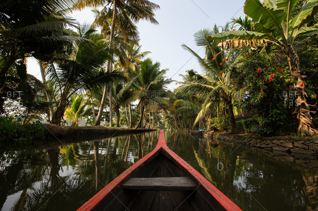 Rowing boat and palm trees on Kerala backwaters, Kollam, Kerala, India