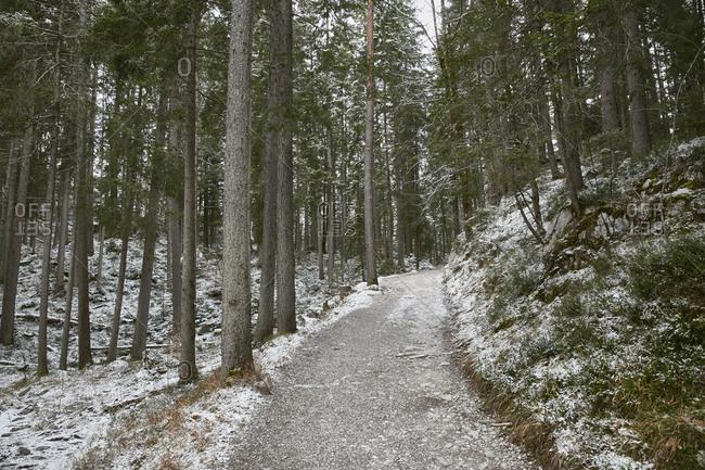 Snowy forest path, Zugspitze, Bavaria, Germany