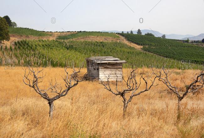 Grape vine fields in Osoyoos, British Columbia, Canada