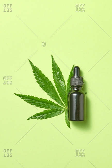 Natural extract oil from green leaf medicinal cannabis.