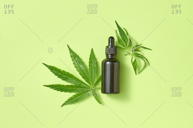 Green leaves of medicinal cannabis with extract oil.