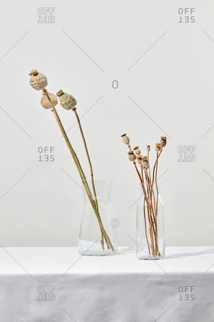 Glass vases with natural poppy plants.