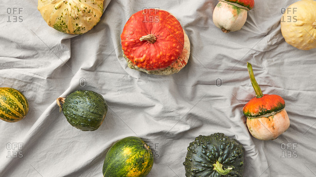 Harvest assortment of ripe fresh organic pumpkins.
