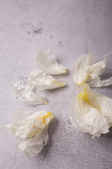Close up of peony flower petals on a gray surface