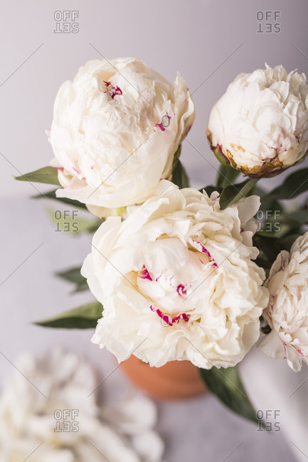 Light beige fresh peony flower arrangement