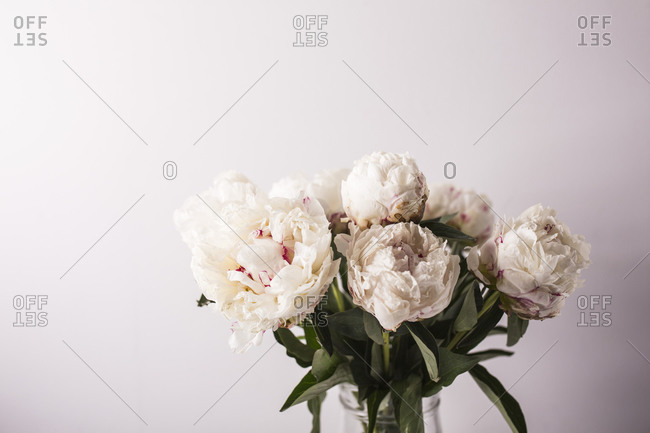 Light beige fresh peony flower arrangement in front of light background