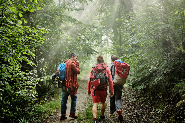 Back view of company of male mountaineers with climbing equipment and backpacks walking along path in woods
