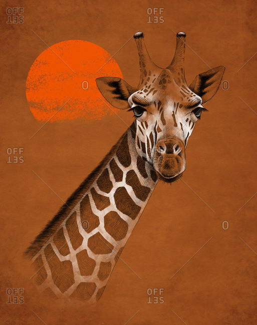 Bright colorful realistic illustration of neck and head of giraffe against sky with hot red sun