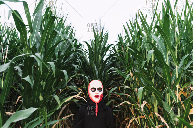 Unrecognizable person wearing masquerade mask and costume standing in cornfield and looking at camera