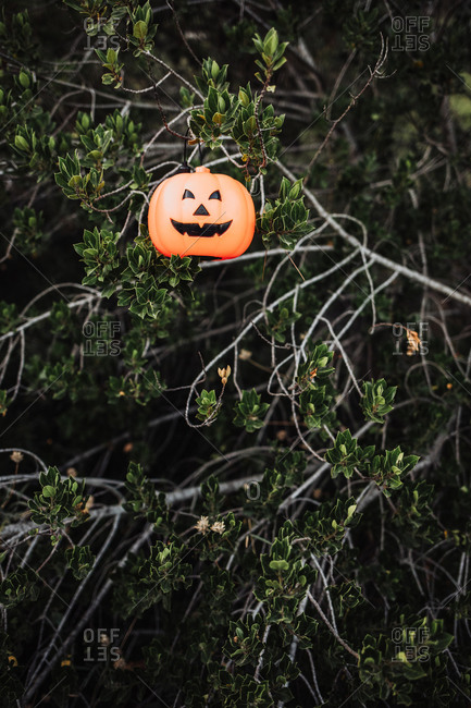 Illuminated lantern in shape of evil pumpkin hanging on tree in park during Halloween