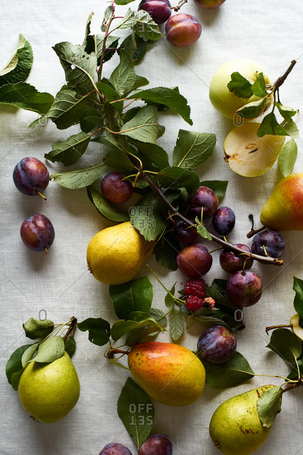 Flat lay with fresh organic fruits from the garden: plums, pears and apples on white textile background
