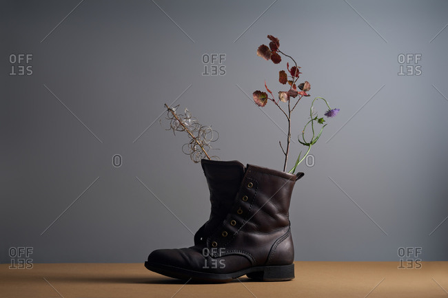 Still life with field plants and leather shoe